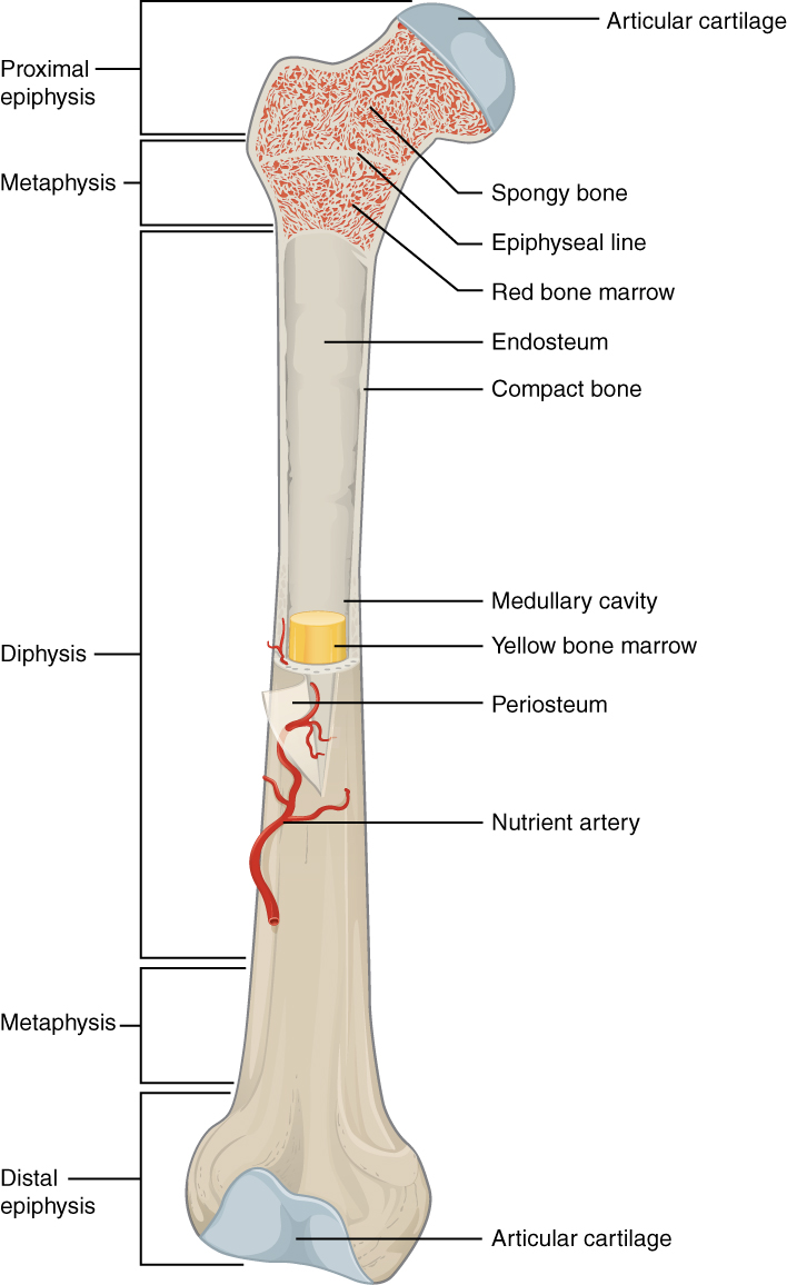 Bone and Soft Tissue Pathology
